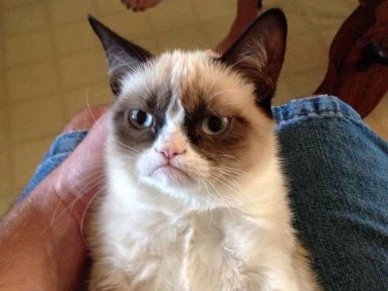 Mi az internetes neve ennek a macskának?