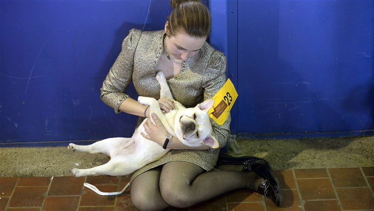 Аманда Mcallister and Laurel the French Bulldog play in the benching area at Pier 92 and 94 in New York City for the first day of competition at the ...