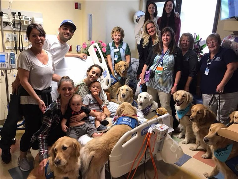 ЛЦЦ K-9 Comfort Dogs These are trained Comfort Dogs for @lccharities. They interact with people at churches, hospitals, events and in disaster situations.